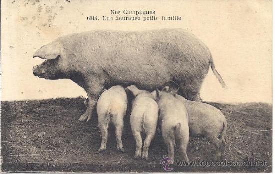 PS3158 POSTAL FRANCESA 'NOS CAMPAGNES - UNE HEUREUSE PETITE FAMILLE'. CIRCULADA EN 1922 (Postales - Postales Temáticas - Animales)