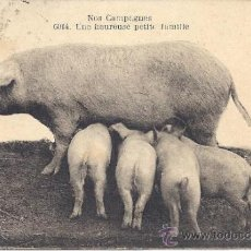 Postales: PS3158 POSTAL FRANCESA 'NOS CAMPAGNES - UNE HEUREUSE PETITE FAMILLE'. CIRCULADA EN 1922. Lote 34077733