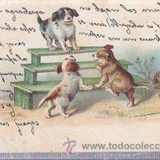 Postales: TARJETA POSTAL ANIMALES, PERROS. Lote 35389462