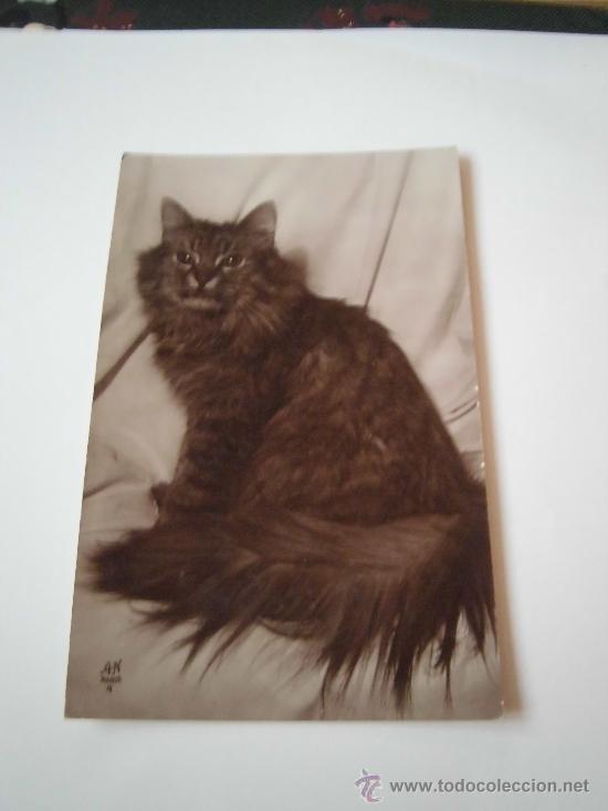 CHINCHILLA ARGENTE TIGRE EDITION AN PARIS (Postales - Postales Temáticas - Animales)