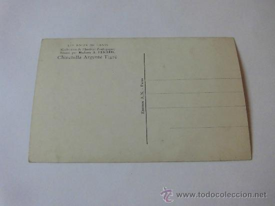 Postales: CHINCHILLA ARGENTE TIGRE EDITION AN PARIS - Foto 2 - 35345136