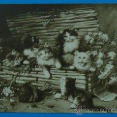 Postales: PRECIOSA POSTAL ANTIGUA DE VARIOS GATITOS.. Lote 35417098