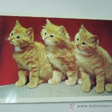 Postales: POSTAL - 3 GATOS - 1994 - L. DOMINGUEZ - COLECCION ELITE. Lote 35424507