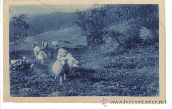 POSTAL OVEJAS SELLADA DE REUS BARCELONA (Postales - Postales Temáticas - Animales)