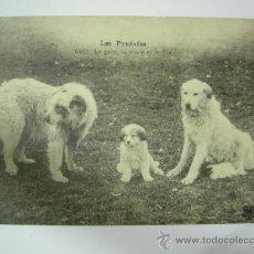Postales: POSTAL FAMILIA DE PERROS DE MONTAÑA DE LOS PIRINEOS (PADRE, MADRE E HIJO ) - FRANCESA. Lote 36375394
