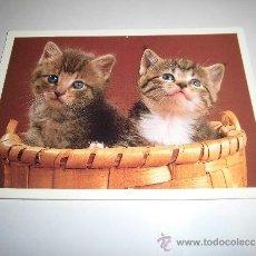Postales: PAREJA DE GATITOS . Lote 36935983