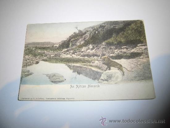 AN AFRICAN MONARCH LEON CIRCULADA (Postales - Postales Temáticas - Animales)