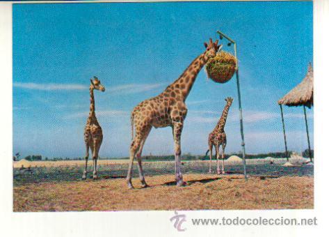 POSTAL SIN CIRCULAR DEL SAFARI PARK VERGEL ALICANTE (Postales - Postales Temáticas - Animales)