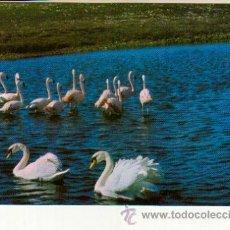 Postales: POSTAL SIN CIRCULAR DEL SAFARI PARK VERGEL ALICANTE. Lote 37121816