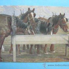 Postales: CABALLOS BEBIENDO AGUA. JAMES HENDERSON & SON. Nº 3155. Lote 38022833
