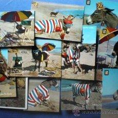 Postales: LOTE 11 POSTALES BURRO ASNO COMICO EN LA PLAYA CON EXPRESIONES QUE CHULO SOY, GUAPA NO CIRCULADAS. Lote 38046888