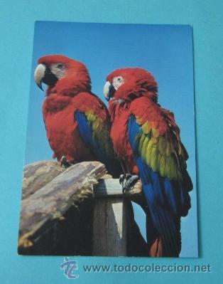 PAREJA DE PAPAGAYOS (Postales - Postales Temáticas - Animales)