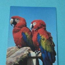 Postales: PAREJA DE PAPAGAYOS. Lote 38436572