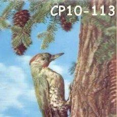 Postales: ANTIGUA POSTAL RELIEVE PAJARO CARPINTERO AÑOS 60 A ESTRENAR*. Lote 38477950