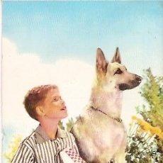 Postales: POSTAL A COLOR ITALIANA TEMA PERROS ESCRITA 1961. Lote 38531516
