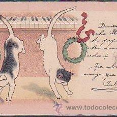 Postales: POSTAL ILUSTRADA DE GATOS. Lote 39006920