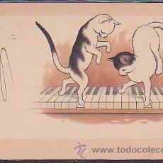 Postales: POSTAL ILUSTRADA DE GATOS. Lote 39006929