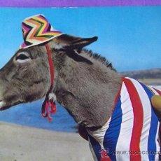 Postales: ANIMALES-V19-NO ESCRITA-BURROS. Lote 39197572