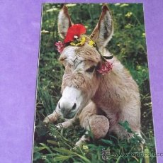 Postales: ANIMALES-V19-NO ESCRITA-BURROS. Lote 39197581