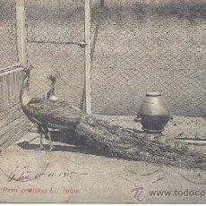 Postales: PS1457 POSTAL DE PAVO REAL (PAVO CRISTATUS L.). FOTOTIPIA THOMAS. CIRCULADA PRINC. S. XX. Lote 39201045