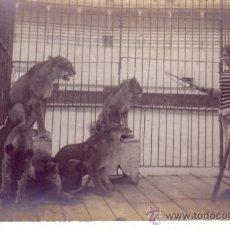 Postales: POSTAL FOTOGRAFICA - DOMADOR DE LEONES - ANIMALES. Lote 39313853