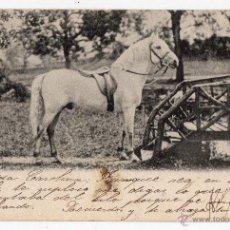 Postales: POSTAL DE CABALLO BLANCO. FRANQUEADA EL14 DE MAYO DE 1905.. Lote 39371064