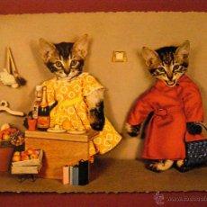 Postales: ANIMALES - PAREJAS - GATOS -. Lote 40347440