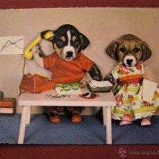 Postales: ANIMALES - PAREJAS - PERROS -. Lote 40347442