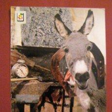 Postales: ANIMALES - BURROS Y BORRICOS -. Lote 40347449