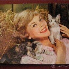 Postales: ANIMALES - COMPAÑIA - ADULTO - MUJER JOVEN - GATO -. Lote 40347452
