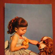Postales: ANIMALES - COMPAÑIA - NIÑA - POLLO - PERRO -. Lote 40347467