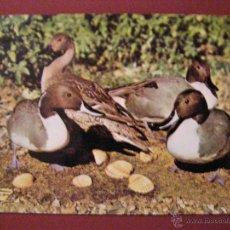 Postales: ANIMALES - MUSEO NACIONAL DE CIENCIAS NATURALES - AVES DE ESPAÑA - SIN CIRCULAR -. Lote 40347473