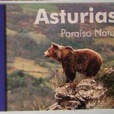 Postales: POSTAL OSO PARDO. ASTURIAS AÑO 2002. Lote 40547385