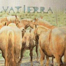 Postales: CABALLOS. Lote 40995994