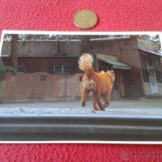 Postales: POSTAL PERRO TOWN IN NEW MEXICO USA CPS ACADIA SCHOOL MAINE NO ESCRITA NI CIRCULADA PHOTO ED ELVIDGE. Lote 41247418