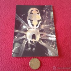 Postales: POSTAL ARAÑA POST CARD SPIDER HAWAII USA EEUU NO ESCRITA N/C BUEN ESTADO PHOTO W. P. MULL POST CARD. Lote 41248206
