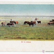 Postales: POSTAL. TOROS EN LA DEHESA.. Lote 41283264