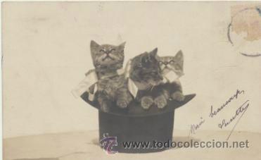 POSTAL FRANCESA. ANTERIOR A 1905. (Postales - Postales Temáticas - Animales)