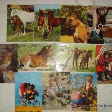 Postales: POSTALES TEMA ANIMALES --REFMENOCA3. Lote 43156963