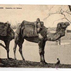Postales: CAMELLOS DEL SAHARA. MARRUECOS. FRANQUEADA.. Lote 43269461