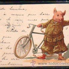 Postales: TARJETA POSTAL DE CERDO.. Lote 44130724