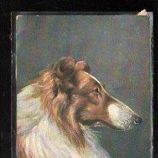Postales: TARJETA POSTAL DE ANIMALES - B.C. SERIE 3055. Lote 45381545