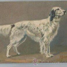 Postales: TARJETA POSTAL DE ANIMALES, PERRO, 94 COCKER SPANIEL. Lote 46237705
