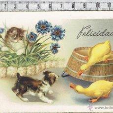 Postales: POSTAL GATO Y PERRO CON PATITOS FELICITACION.. Lote 46454348