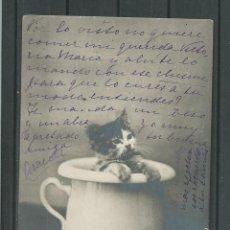 Postales: POSTAL ANTIGUA DE PARIS -ORINAL CON GATO - CIRCULADA EL 4 - 9 - 1905 SIN DIVIDIR. Lote 46620809