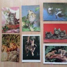 Postales: POSTALES DE ANIMALES_PAJAROS_GATOS_FELINOS. Lote 47118452