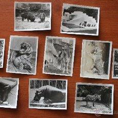 Postales: ANTIGUAS FOTOGRAFIAS TARJETAS EN BLANCO Y NEGRO DEL ZOOLOGICO DE AMSTERDAM – 10 FOTOS ANIMALES. Lote 47707738
