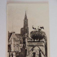 Postales - Strasbourg: Nid de Cigognes - 48013031