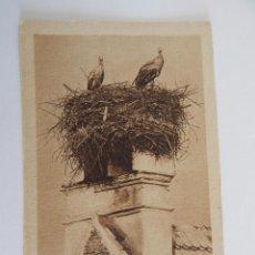 Postales - Alsace: Nid de cigognes - 48151006