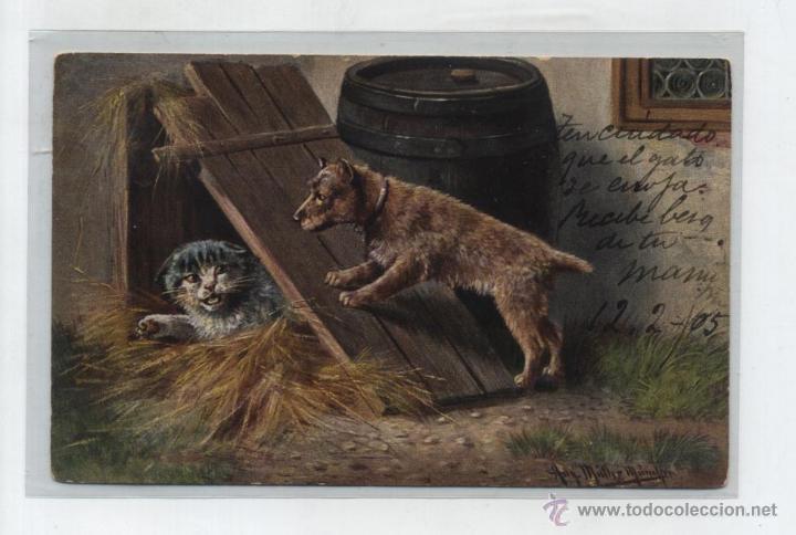 POSTAL SUIZA. FRANQUEADO Y FECHADO EN LES AVANTAS EN 1905. AL DORSO VARIOS FECHADORES DE PASO. (Postales - Postales Temáticas - Animales)